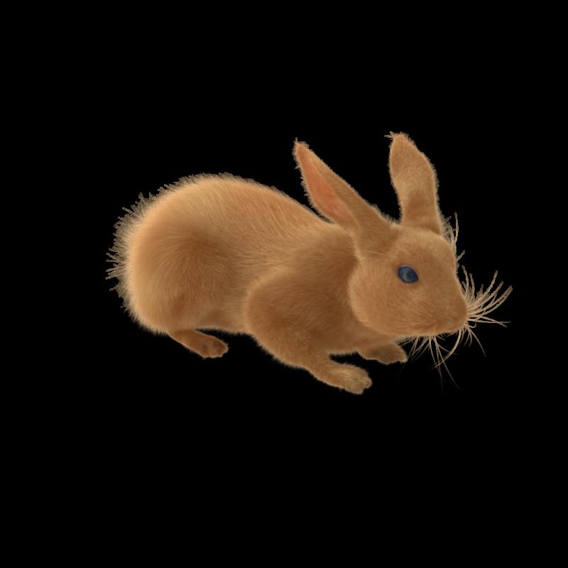 Rabbit.H03.2k