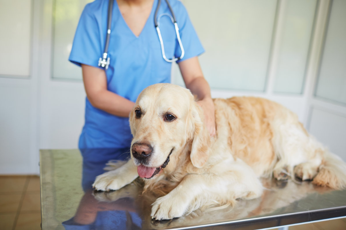 Examining in vet clinic